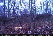 2015 Deer Pics / 2015 photo contest deer photos trailcampro.com