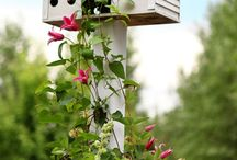Garden - Birdhouses,Bird Cages / by Lucy Rouse
