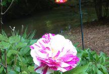 Garden Ideas / Garden ideas from Butterfly Creek