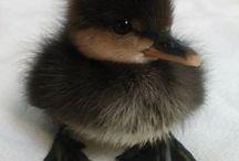 Little duckling, kwak kwak