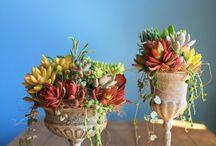 Домашние растения.