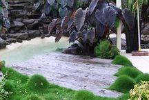 Koran grass gardens