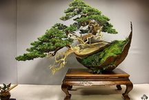 Arbres ... bonsaï