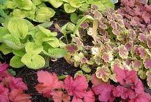 Perennials for Shade / Perennials for Shade