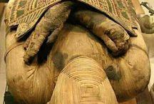 Mumii