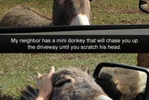 funny Animal / http://goo.gl/bw3wTa