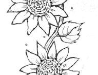 Slunečnice -sunflower