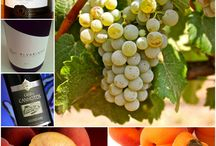Grapes Type - Wine