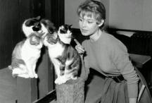 Famous felines / Famous kitties or kitties with celebrities