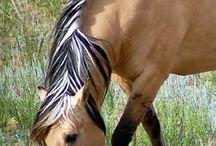 Beautyful horse / My best animal