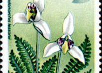 Flores y plantas del mundo