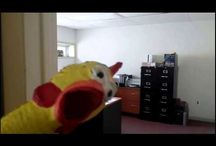 Rubber Chicken Antics... / Sometimes work gets really busy ...and a Rubber Chicken stalks ya....