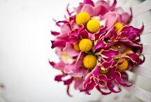 Bella Rugosa Bouquets