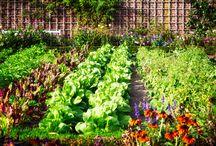 Køkkenhave | Vegetable garden / Har du en lille drøm om at blive den heldige indehaver af en skøn køkkenhave? Her finder du tips og tricks til hvordan du får succes med de mange urter og planter.