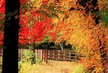 Sonbahar resimleri...