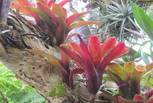 Bromeliads And Orchids / Growing and displaying Bromeliads and Orchids.