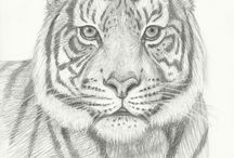 Drawings of animales.