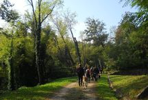 Dog Walking al Bosco di Plessiva - 12 ottobre 2014