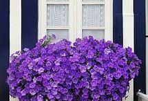Window・Door