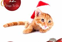 12 Days of Christmas! / The 12 Days of Christmas with Manor Vets...