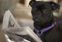 cani divertenti in video / a chi adora i cani che sono divertenti trova dei video qui