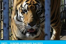 Twitter / Who ever thought a tiger could find so many friends on Twitter! We even trended #FreeTonyTiger on Super Bowl Sunday 2.3.2013!