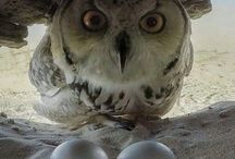 owl and eggs
