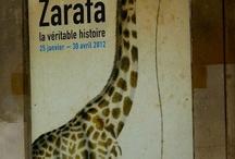 Zarafa and friends / by Anne Dardaud