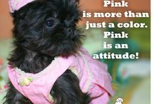 Dogs in Pink