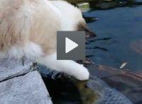 VIDEO DAL WEB
