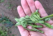 ハーブの香る自家農園 / 元気にすくすくと育っています!