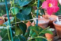 Rostliny pěstování