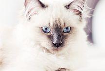 kedi biraz da köpek cat dog