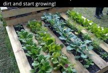 Gardening and hints