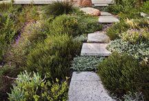 Fynbos gardens