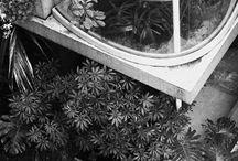 Jardin & plantes