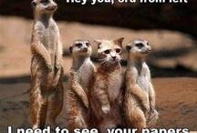 Animal humor / Hilarious / funny animal photos and captions