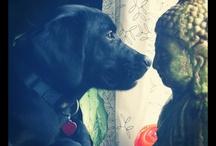 Doggies ♥ / by Tina Joudry