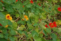Bylinky, léčivé rostliny