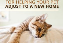 Moving with Pets / Ideas to move your pet from one location to another