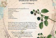 Heilkräuter Hildegard von Bingen