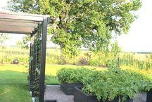 zeleninove zahrada
