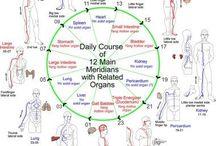 Anatomie pe organe