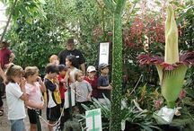 Children in the Garden / The Garden offers an array of science programs and tours to inspire future scientists.