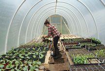 Veggie Gardening♥♥♥
