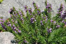 plantas medicinales / Remedios naturales usando plantas medicinales.
