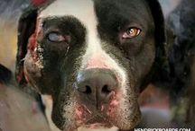 Animal abusers sud be killed same way