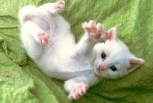 Too cute!!! / by Debra Zimmermann Gauthier