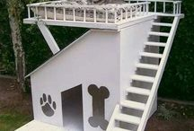 home for dogs and cats