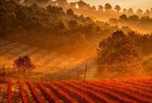 Fruit of the Vine, Fruit of the Tree / Vineyards and Orchards / by -stephiefaye-